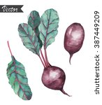 watercolor hand drawn beetroot... | Shutterstock .eps vector #387449209