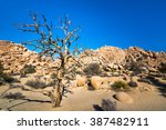 Stock photo a tree in joshua tree national park 387482911