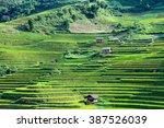 Rice Fields On Terraced In...