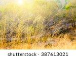 Prairie Grass On Mountain With...