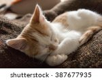 Stock photo little cat sleeping 387677935