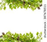 beautiful green leaves frame on ... | Shutterstock . vector #387678511