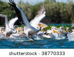 flock of  american great white... | Shutterstock . vector #38770333