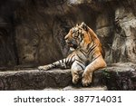 Tiger Sitting In A Zoo.