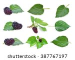 Mulberry With Leaf Isolated On...