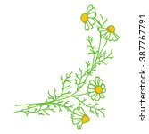 chamomile element for design. | Shutterstock . vector #387767791