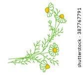 chamomile element for design.   Shutterstock . vector #387767791