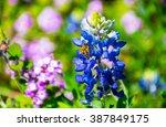 Texas Wild Flowers Blue Bonnet...