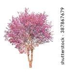 Pink Flower Sour Cherry Tree...
