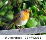 Robin Perched On A Railing At...