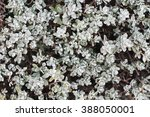 little white daisy | Shutterstock . vector #388050001