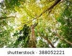 beautiful forest   Shutterstock . vector #388052221
