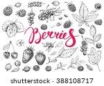 farm food hand drawn elements.... | Shutterstock . vector #388108717