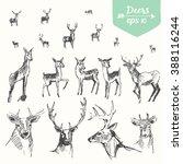 Set Of Hand Drawn Deers ...