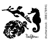 Graphic Vector Seahorse...