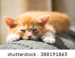 Stock photo cute kitten sleeping after playing on couch 388191865