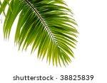 beautiful coconut tree leaf on... | Shutterstock . vector #38825839