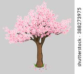 Cherry Blossoms Isolated On A...