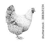 free range hen illustration old ... | Shutterstock . vector #388365154