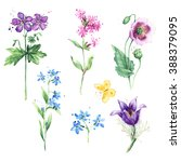meadow floral set. collection... | Shutterstock . vector #388379095