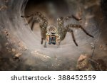 spider looking from his web in... | Shutterstock . vector #388452559
