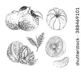 vector citrus fruit hand drawn... | Shutterstock .eps vector #388469101