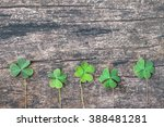 Three Leaf Clovers On Grunge...
