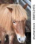 Small photo of Face brown horse with a forelock (fringe)