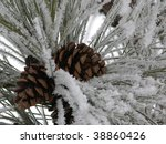 Cluster Of Pinecones On A Snow...