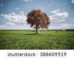 Blossomed Tree On A Grass Field