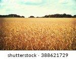 rye field or wheat field in the ... | Shutterstock . vector #388621729