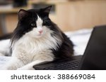 Stock photo  cat at the notebook 388669084