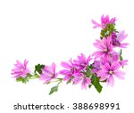 bouquet of flowers malva... | Shutterstock . vector #388698991