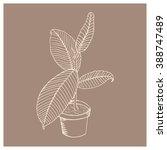 light shape ficus on a brown... | Shutterstock .eps vector #388747489