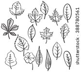 vector set of various leaves.... | Shutterstock .eps vector #388780561