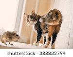 Stock photo cat playing with little gerbil mouse on the table natural light 388832794