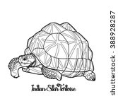 Graphic Indian star tortoise drawn in line art style isolated on white background.  Geochelone elegans. Rare turtle pet.  Coloring book page design for adults and kids