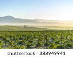 sunrise over grape winelands... | Shutterstock . vector #388949941
