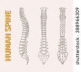 skeletal system | Shutterstock .eps vector #388966309