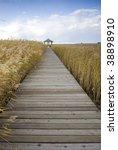 Boardwalk Through Reed Field