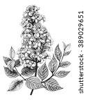 lilac or syringa vulgaris... | Shutterstock . vector #389029651