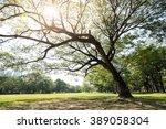 big tree in the park | Shutterstock . vector #389058304