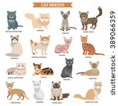 cat breed flat icons set with... | Shutterstock .eps vector #389066359