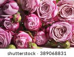 background of pink roses   Shutterstock . vector #389068831