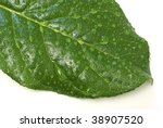 Leaf with water-drops - stock photo