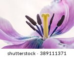 Stamens And Pistil Macro  Phot...