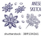 anise sketch. aniseeds  flower  ...