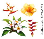 Tropical  Flower Drawing....