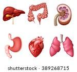 internal human digestive system ... | Shutterstock .eps vector #389268715