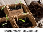 Sprouting Tomato Seedlings Wit...